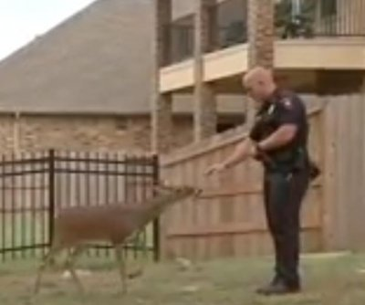 Friendly deer tied up behind Texas home rescued by police