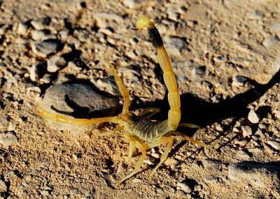 FDA OKs clinical trial for scorpion venom-based Tumor Paint