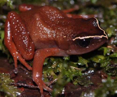 African frogs threatened by deadly fungus