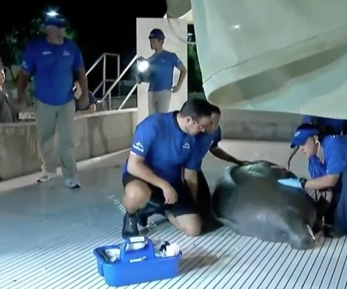 Manatee rescued from Florida storm drain