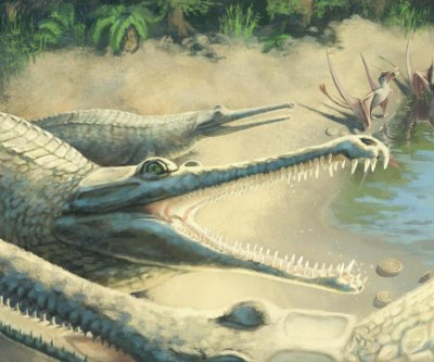 Jurassic crocodile species identified 250 years after fossil discovery