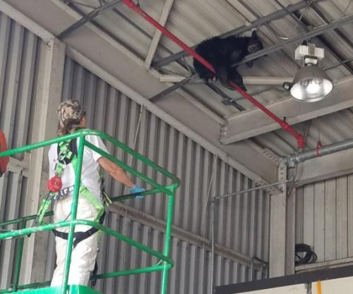 Bear rescued from rafters at Virginia manufacturing plant