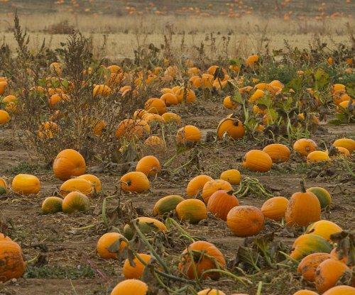 Two hurt in explosion at Delaware pumpkin-flinging contest
