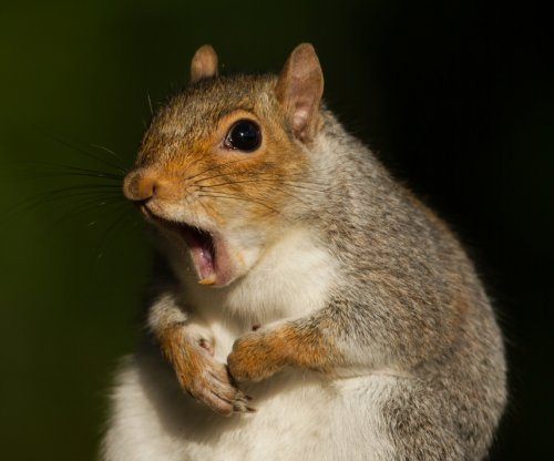 Squirrel knocks out power to 2,296 in New Jersey