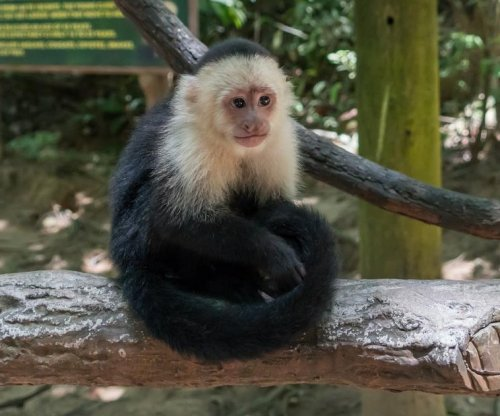 Residents report mystery monkey on the loose in British Columbia