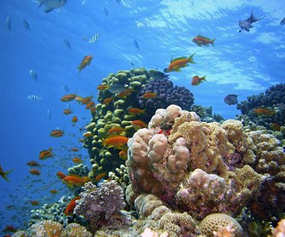 Study explains how the oceans became so diverse