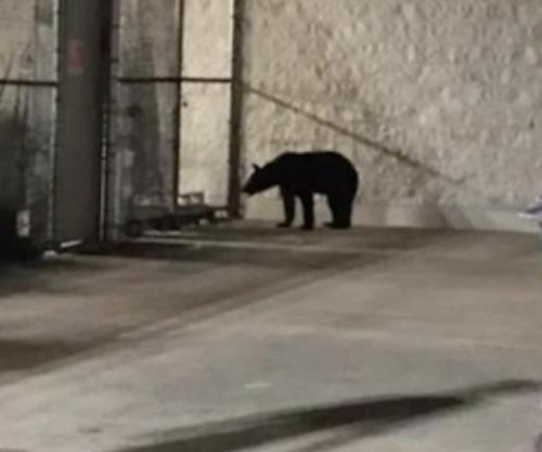 Black bear spotted wandering outside Kentucky Walmart