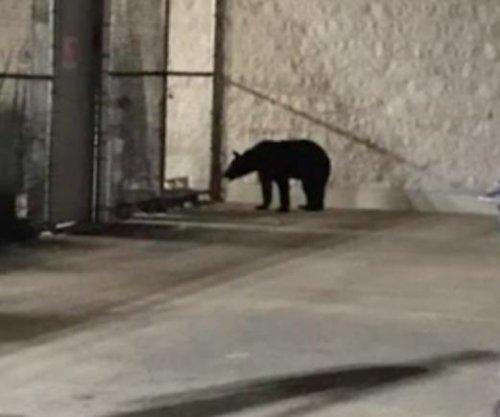 Black bear spotted wandering outside Kentucky Walmart