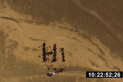 Kansas farmer uses 'cow art' to say 'hi' to SpaceX rocket
