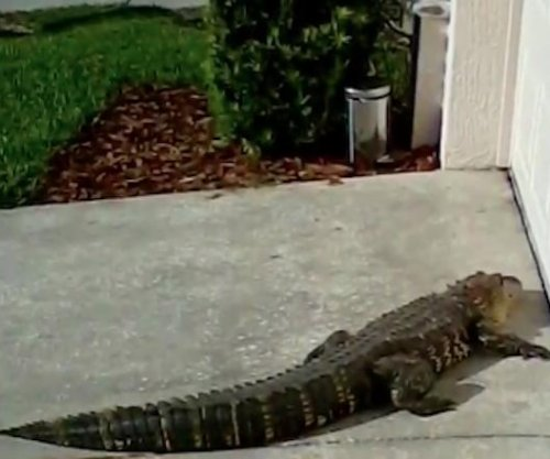Alligator turns up in front of Florida family's front door