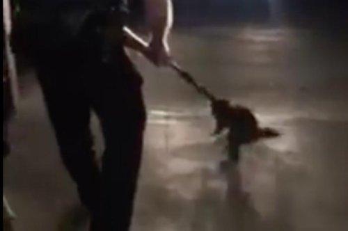Colorado police shoo away home-invading raccoon