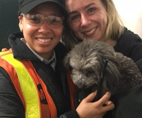 New York subway trains delayed due to poodle on the tracks