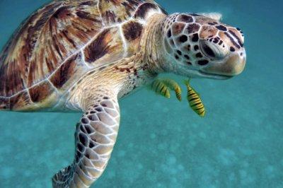 U.N.: 1M species threatened as global extinction rates speed up