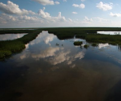 Coastal wetlands offer millions of dollars worth of hurricane protection
