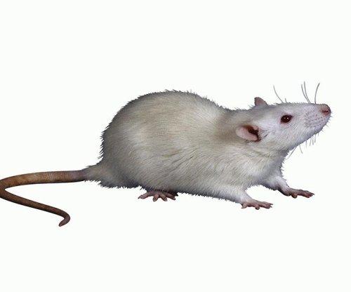 Anti-aging process rejuvenates lab mice: Study