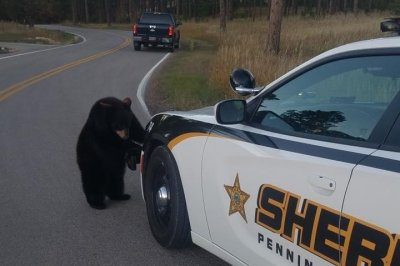 Deputy rounds up bear cubs after wildlife park escape