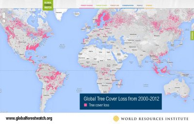 Google offers bird's-eye view of global deforestation