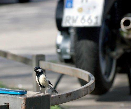 City birds produce fewer, smaller chicks