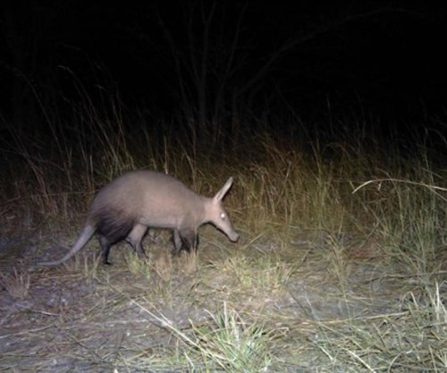 Camera traps in Angola capture rare photos of big cats, honey badgers, elephants