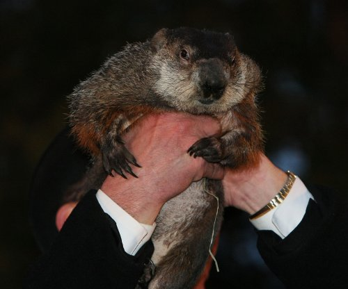 Groundhog Day: Punxsutawney Phil does not see shadow, early spring coming