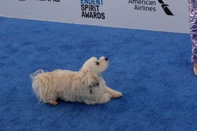 Glenn Close brings dog Pip to Independent Spirit Awards