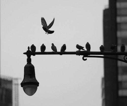 Study: North American bird population has declined by 2.9 billion since 1970