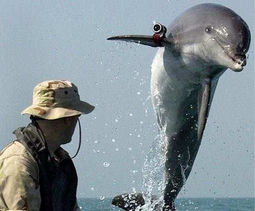 Hamas captures alleged Israeli spy dolphin