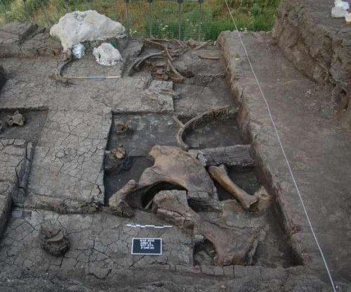 Stone Age elephant butchering site found in Greece