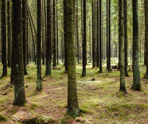Forest carbon stocks overestimated for half-century due to flawed formula