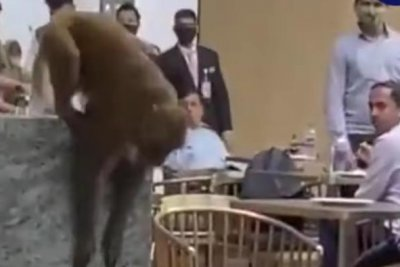 WATCH: Monkey wanders into airport VIP lounge in India