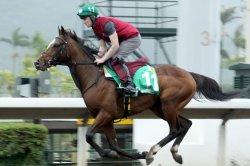 UPI Horse Racing Preview: Hong Kong Internationals, Baffert 2-year-olds featured