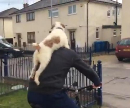 Dog gets a piggy back ride from bike-riding owner