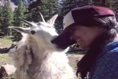 Watch:-Woman-hiking-in-Colorado-gets-licked-by-a-mountain-goat