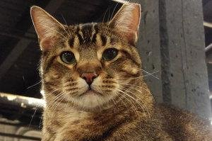 Venkman the rat-catching cat missing from Chicago brewery