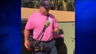 Firefighters rescue kitten trapped for days in utility box
