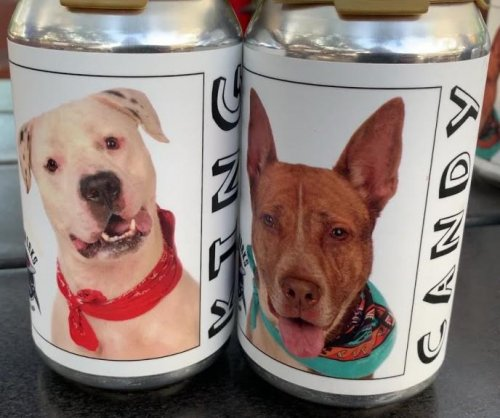 Brewery using beer cans to find homes for shelter dogs