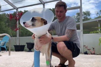 Florida man fist-fights alligator to save dog