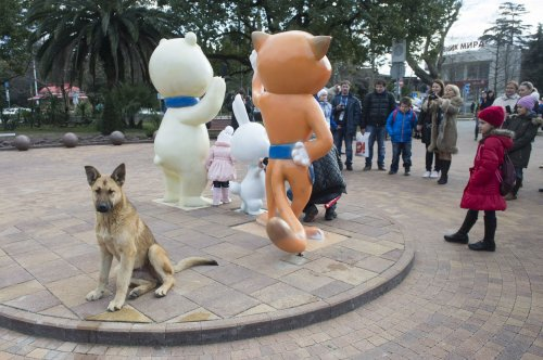 Russian billionaire saves Sochi's stray dogs
