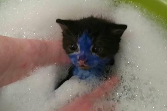 Watch Kittens Shrek And Smurf Colored With Marker Ink