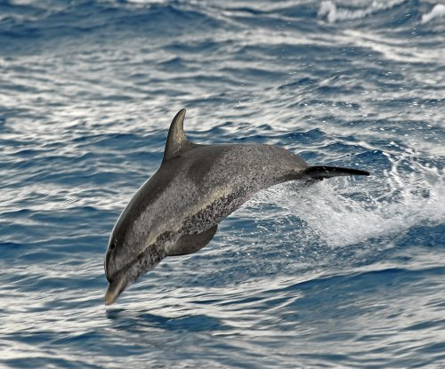 Dolphin breaks woman's ankles after jumping into family boat