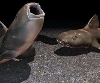 Sharks used suction feeding 335 million years ago
