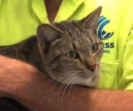 Stowaway cat takes 750-mile trip in neighbor's moving truck
