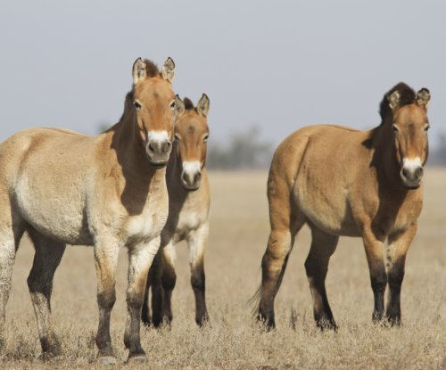 Research reveals domestication's effects on horse genes