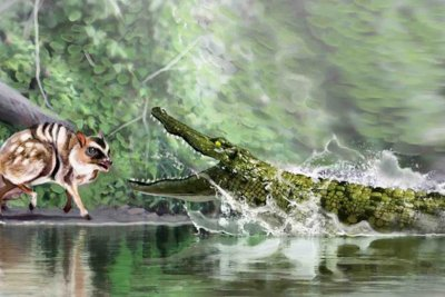 Fossils confirm presence of caiman-like reptile in Spain 16 million years ago