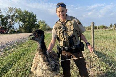 Deputy wrangles runaway emu in Wyoming