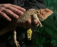 Exotic lizard found under New York state woman's trash can