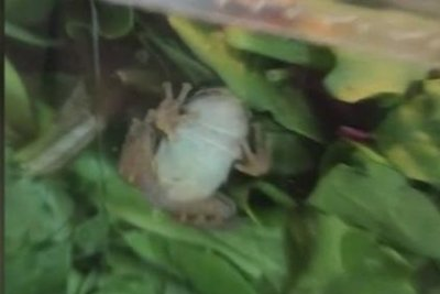 Wisconsin family finds live frog in store-bought salad