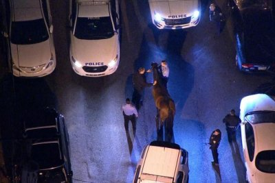 Escaped horse runs through streets of Philadelphia