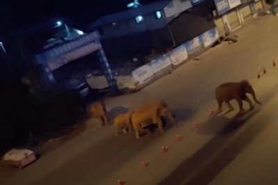 Herd of 15 Asian elephants nearing capital of China's Yunnan province