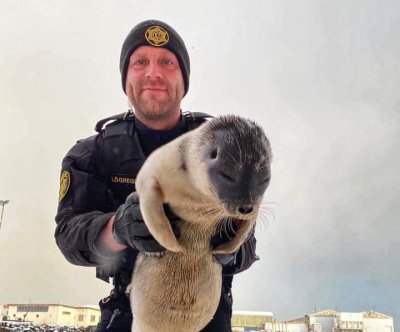 Arctic seal rescued after long journey to Iceland